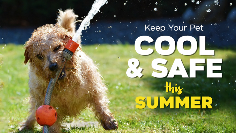 Keep Your Pet Cool and Safe This Summer