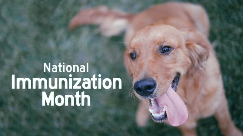 Happy National Immunization Awareness Month!