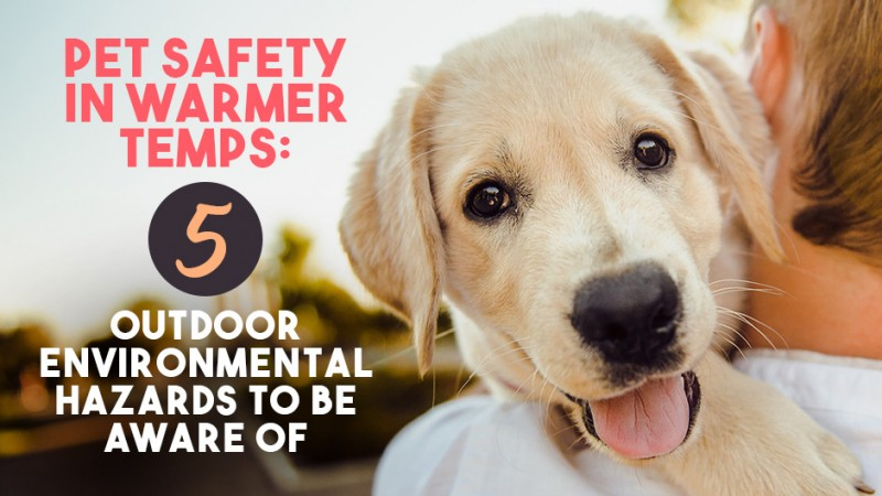 Pet Safety In Warmer Temps