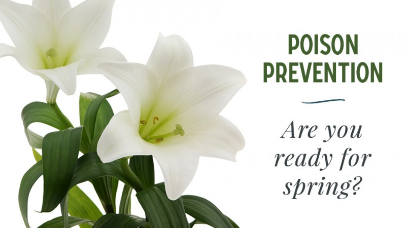 Pet Poison Prevention: Are You Ready for Spring?