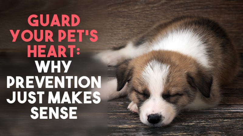 Guard Your Pet's Heart: Why Prevention Just Makes Sense